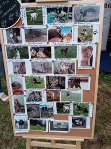 Alcuni cani e gatti del rifugio
