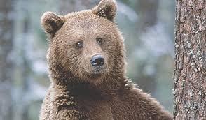 Dalla parte degli animali, l'orso M49