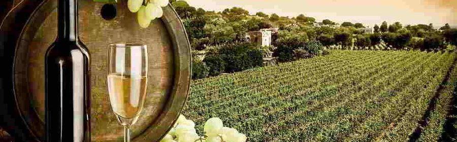 Strade-del-Vino-1440x564_c