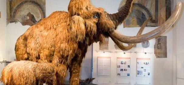 mammut CAFFI (1)